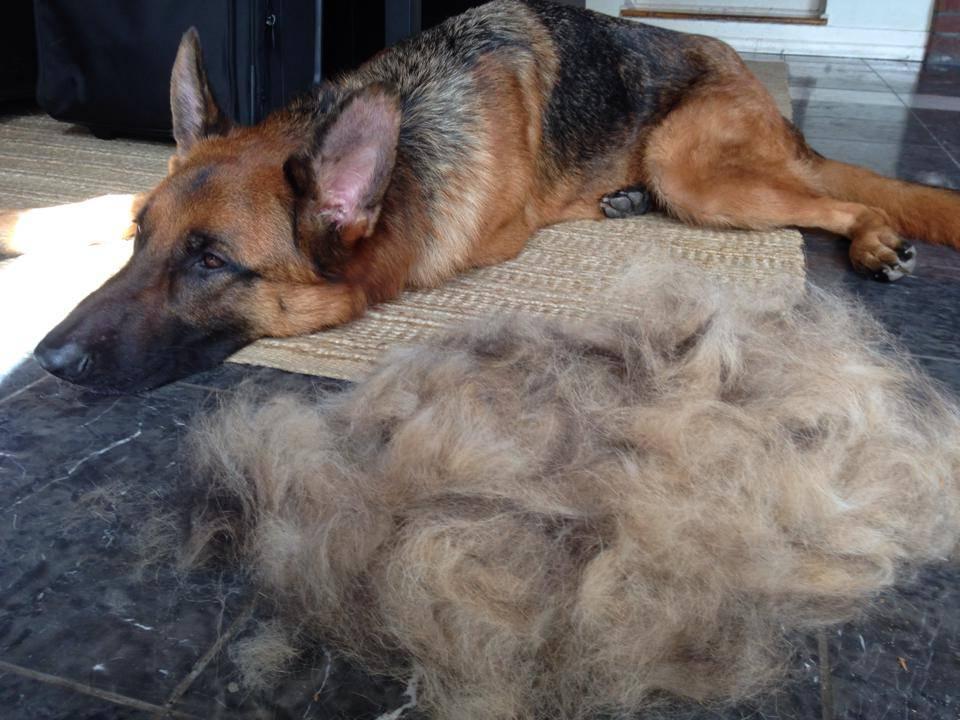 Blowing Coat Long Dangerous Tails
