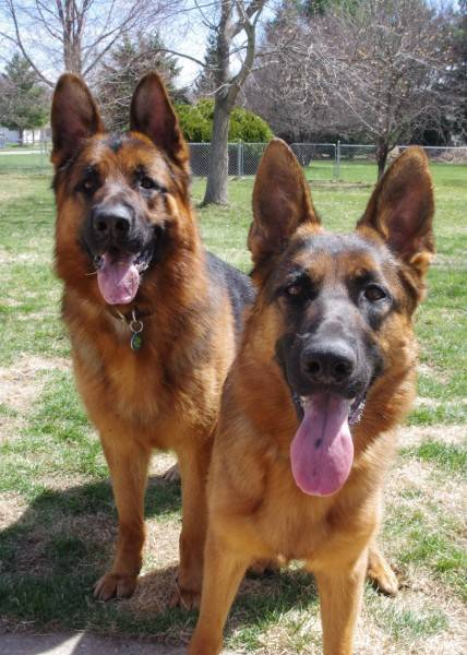 "Ember and Cabrera say ""Happy Easter"" and they are glad that it is spring!"