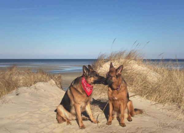 1-30-16 Aiden and Yasha at Crosby Beach.2png