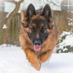 10. Aslan flying snow photo