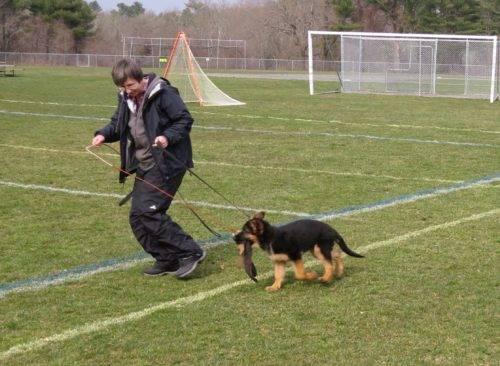Agility Dog Training Westborough Ma