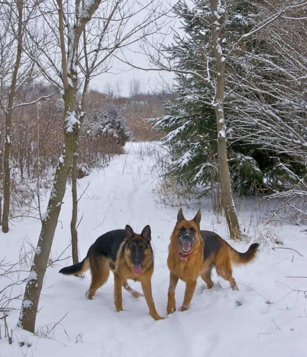 Kona and Gracie