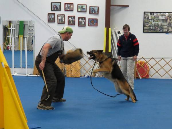 3. 1-11-14 Aiden - Protection training with Scott (4)