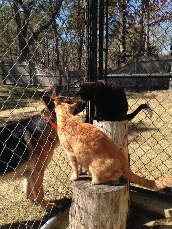 3-8-14 Cats in the sun 022