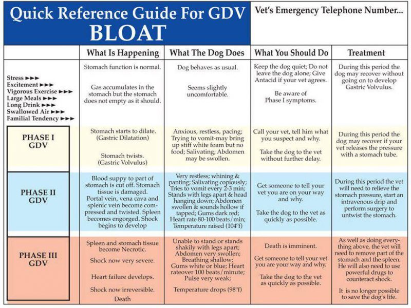 GDV_Bloat_Quick-Reference-Guide